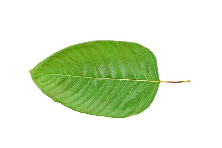 Kratom Defenders Fight Plan To Ban Herb Used By People In
