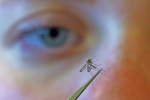 Disease-Carrying Mosquitoes Fly Free as Health Departments Focus on Coronavirus thumbnail