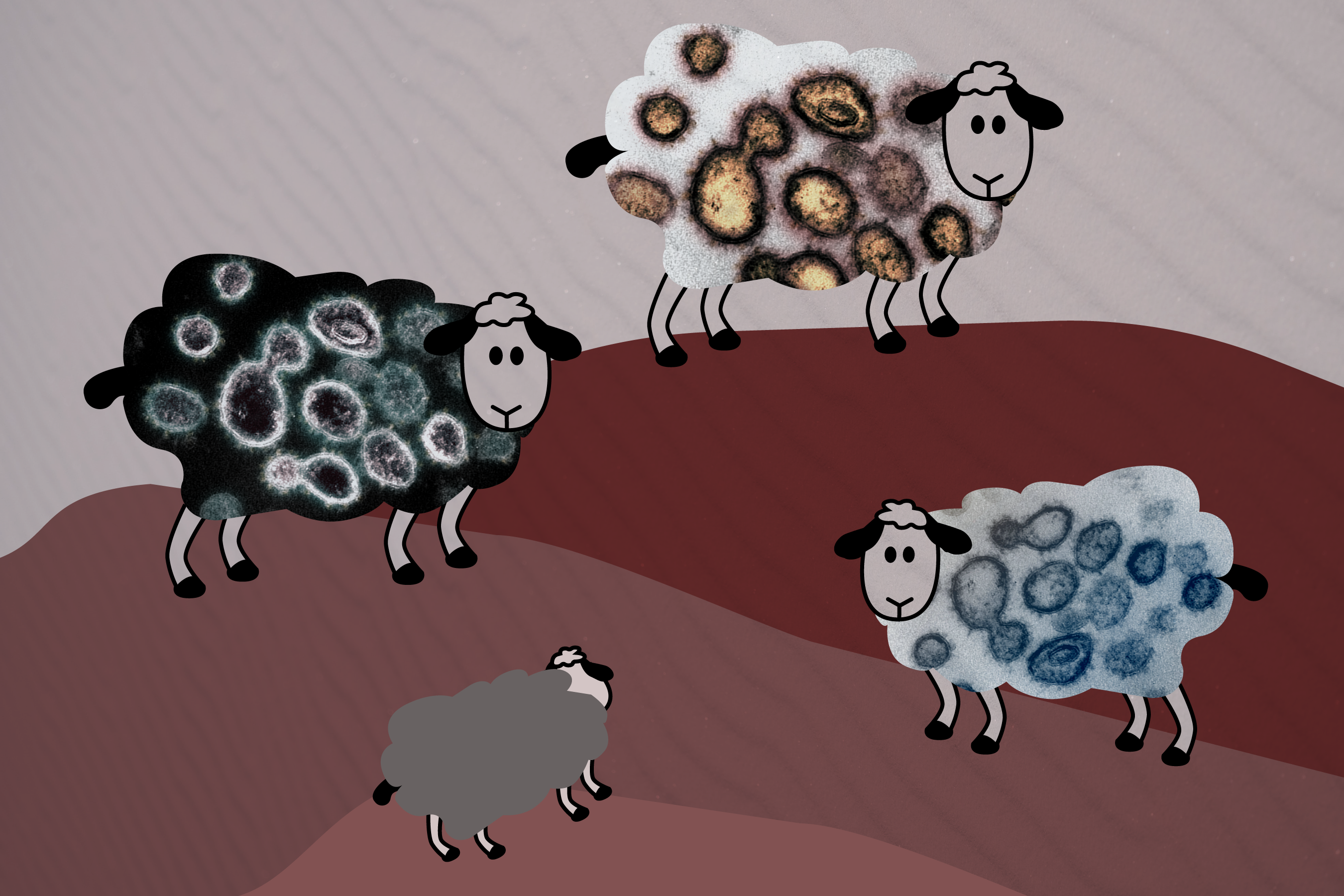 Corralling the Facts on Herd Immunity